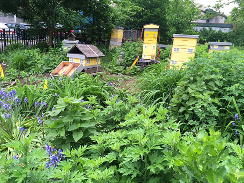 Beehives in Battery Park, Manhattan. Image courtesy of NYC Department of City Planning.