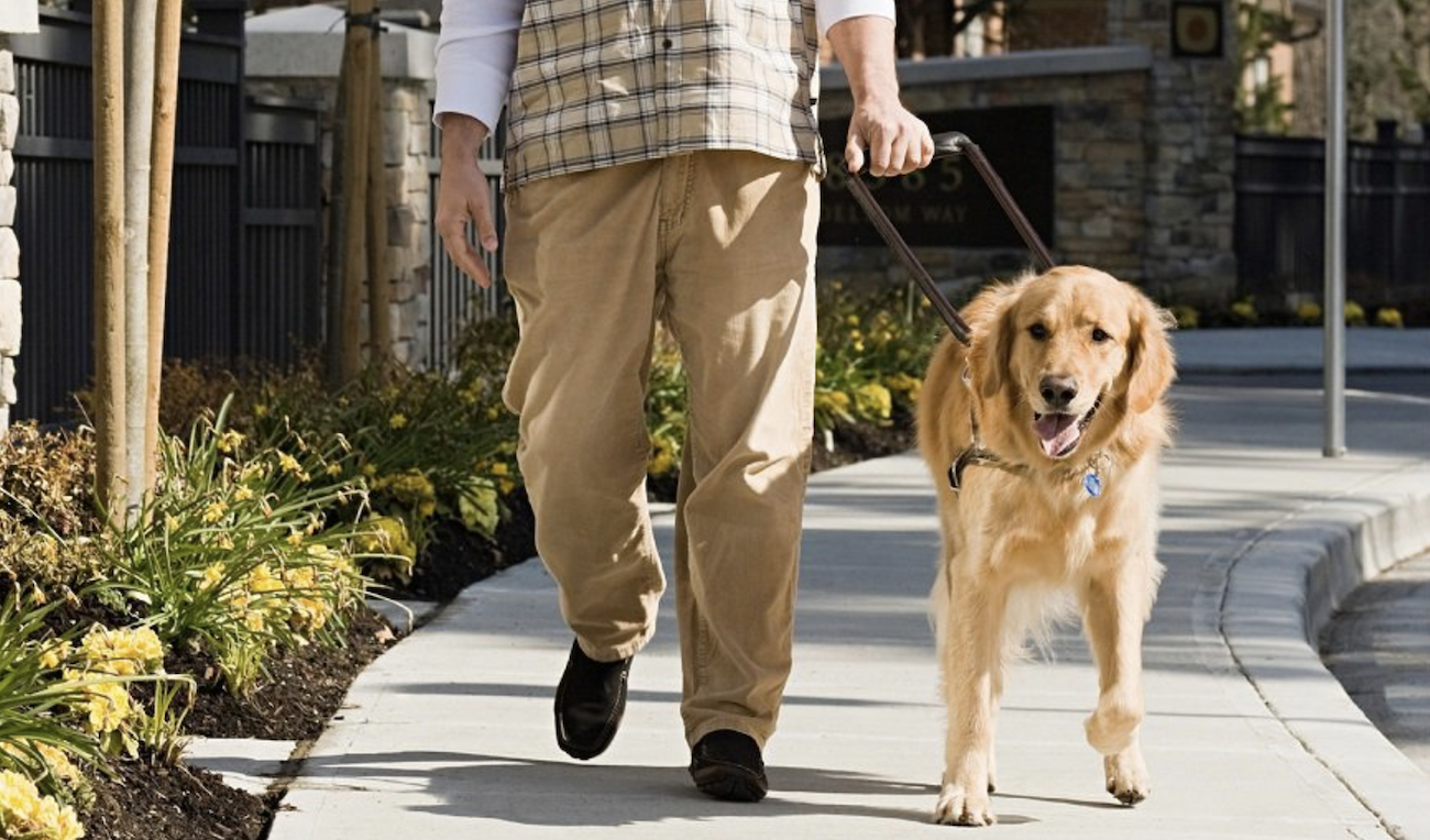 Person  walking with a service dog