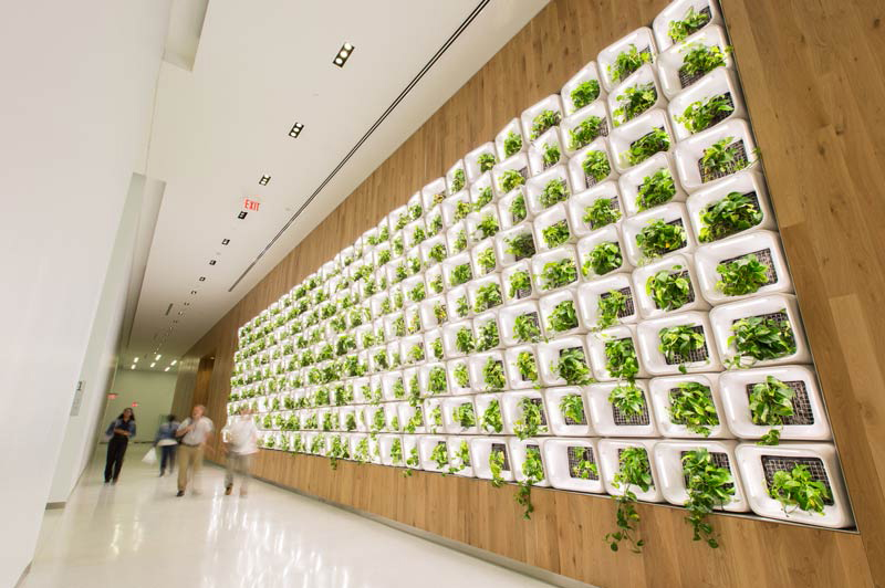 Green, leafy plants protrude from a white grid mounted on a wood-paneled wall.
