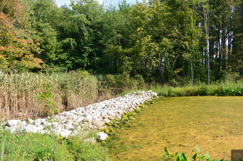 Rocks lined up along a pond bank provide flood protection.