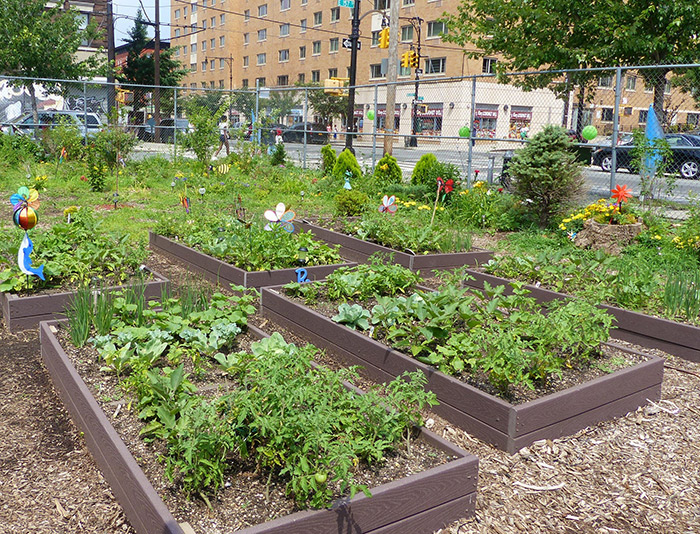 urban agriculture projects can be a great way to build community and provide opportunities for learning about and tasting fresh healthy foods - Urban Garden