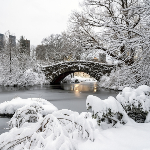 Central park tour southern welcome tour events city for Winter activities in nyc