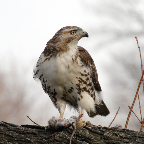 Great Backyard Bird Count | Events | City Of New York