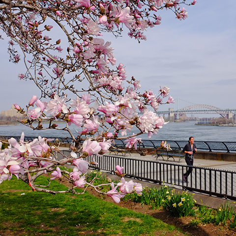 City of New York @nycgov - Photo credit: NYC Parks