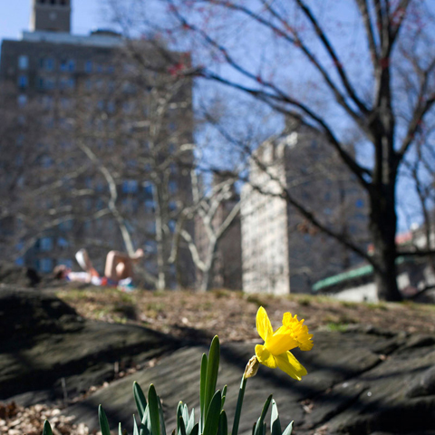 Share #SignsOfSpringNYC photos & enter our Instagram contest! http://nyc.gov/signsofspring