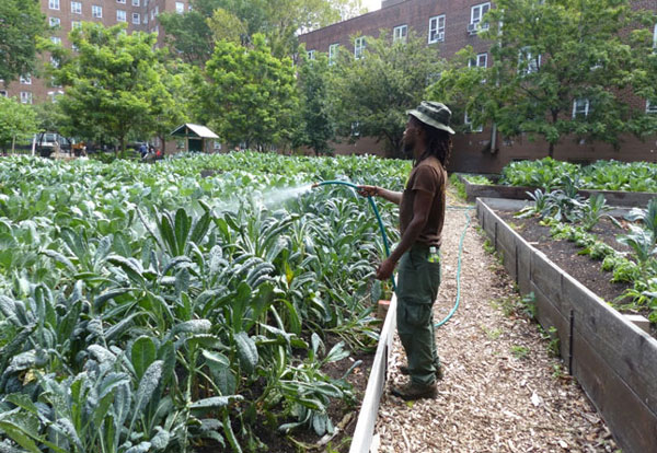 Farms at NYCHA builds new urban farms at three NYCHA developments