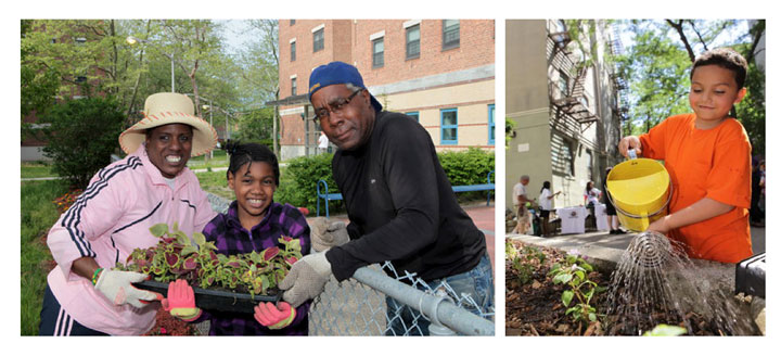 Pictures of NYCHA Residents Gardening