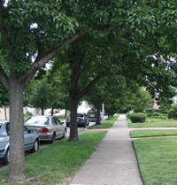 Street trees and planting strip in lower density neighborhood, Queens