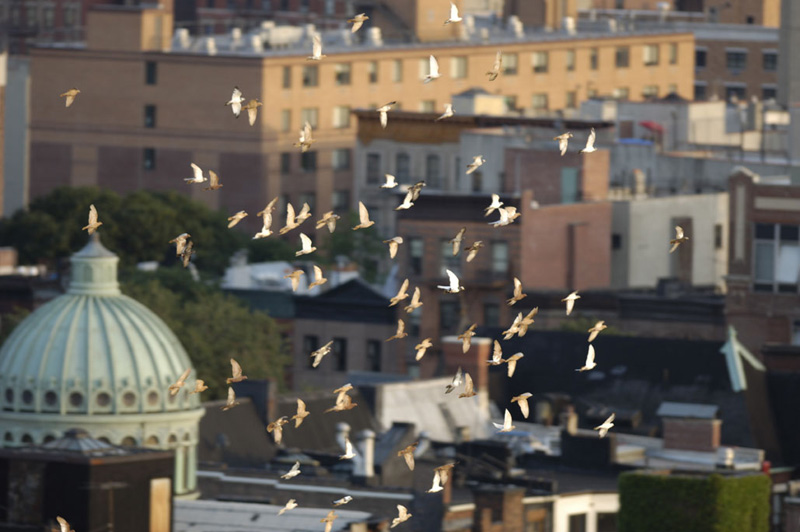 Birds flying through the City