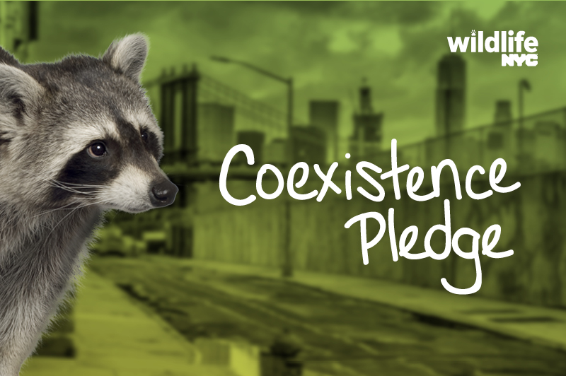 Coexistence Pledge